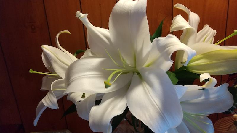 教室内生け花/百合の花